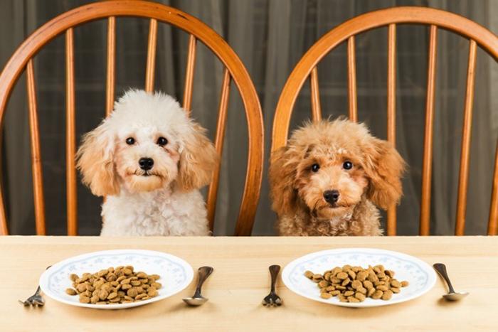Как выбрать корм для собак #3 - фото в блоге (гиде покупателя) hotline.ua