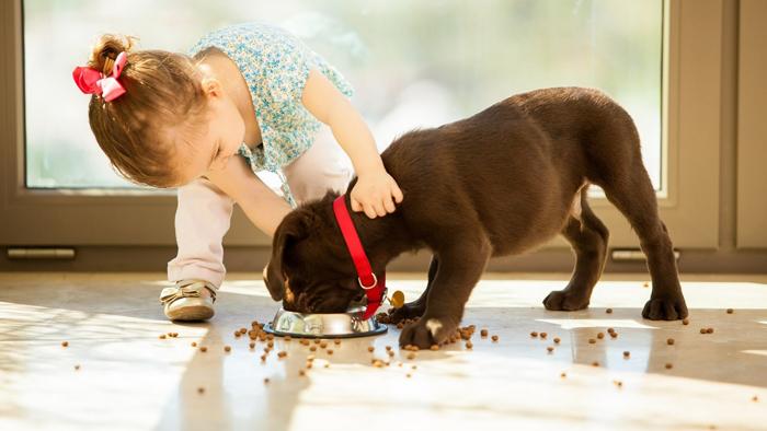 Как выбрать корм для собак #2 - фото в блоге (гиде покупателя) hotline.ua