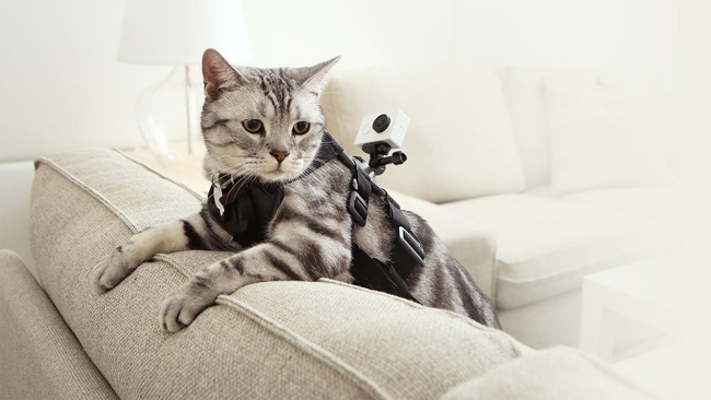Котейка с экшн-камерой